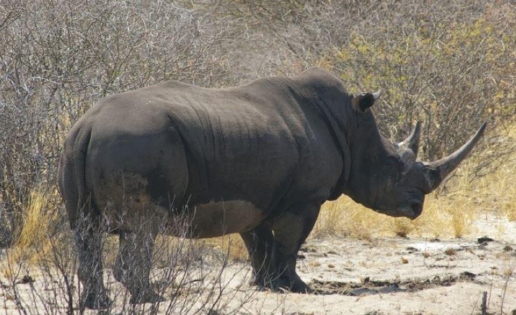 0dds Rhino Web Ready