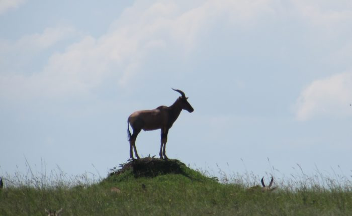 Topi on a hill | Photo: Andrea Berger/Borton Overseas