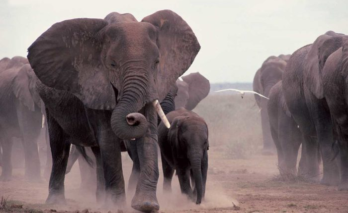 Africa – The Big 5 Credit Kenya Tourist Board
