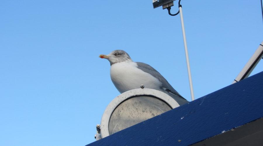 Bird Maria Sievers Img 6871