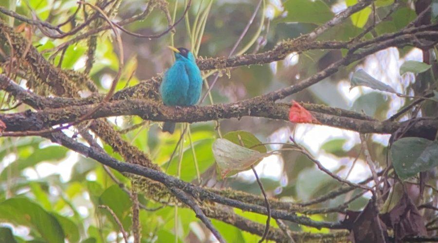 Costaricabird 2