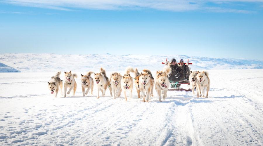 Dogsledding In Kangerlussuaq, Anders Beier, Visitgreenland.com