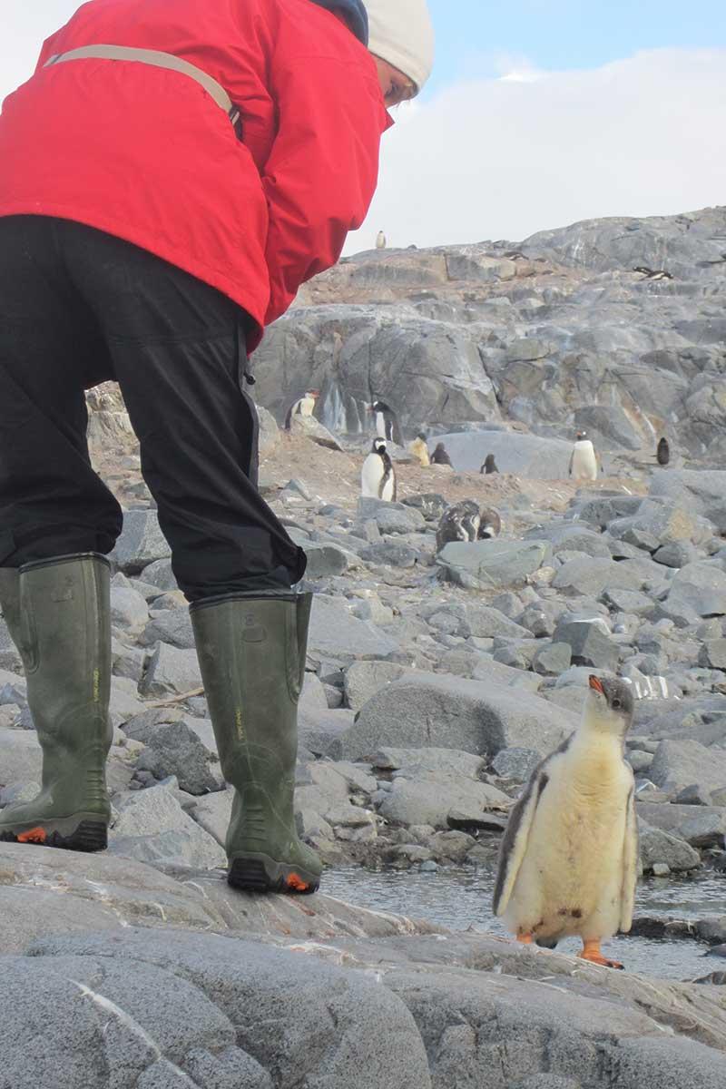 Faq Antarctica