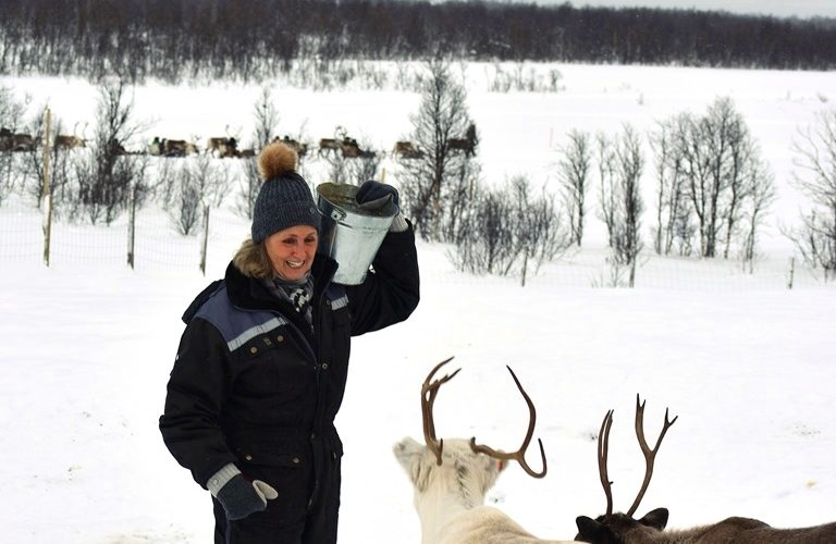 Feeding Reindeer Susie , Borton Overseas Client 3