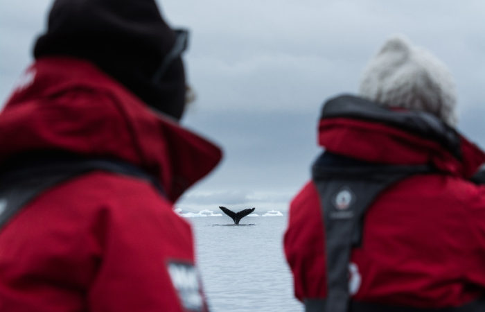 Humpback Fluke With Guests © Polar Latitudes