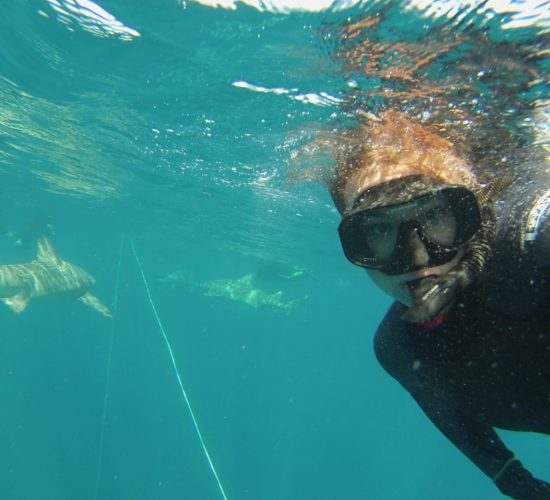 Swimming with sharks in Jupiter, Florida