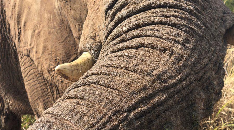 Elephant Interaction, Victoria Falls, Zimbabwe
