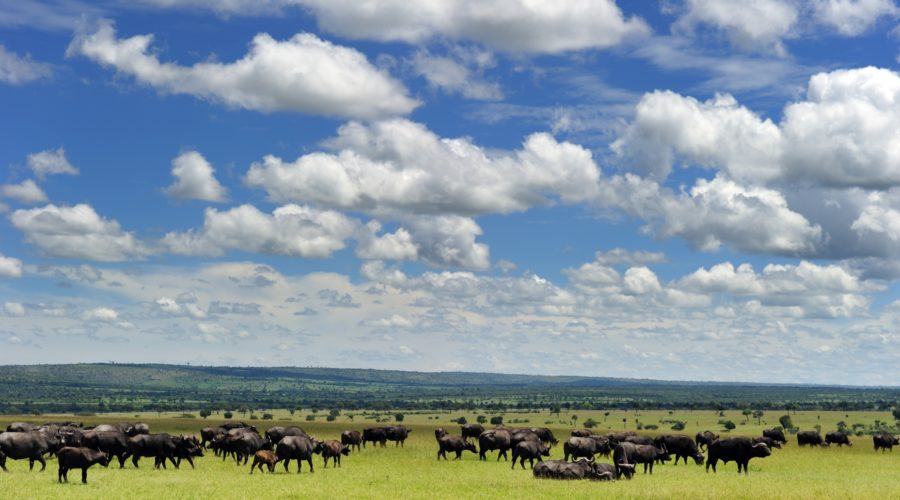 Photo: Kenya Tourist Board