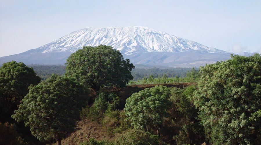 Kilimanjaro View