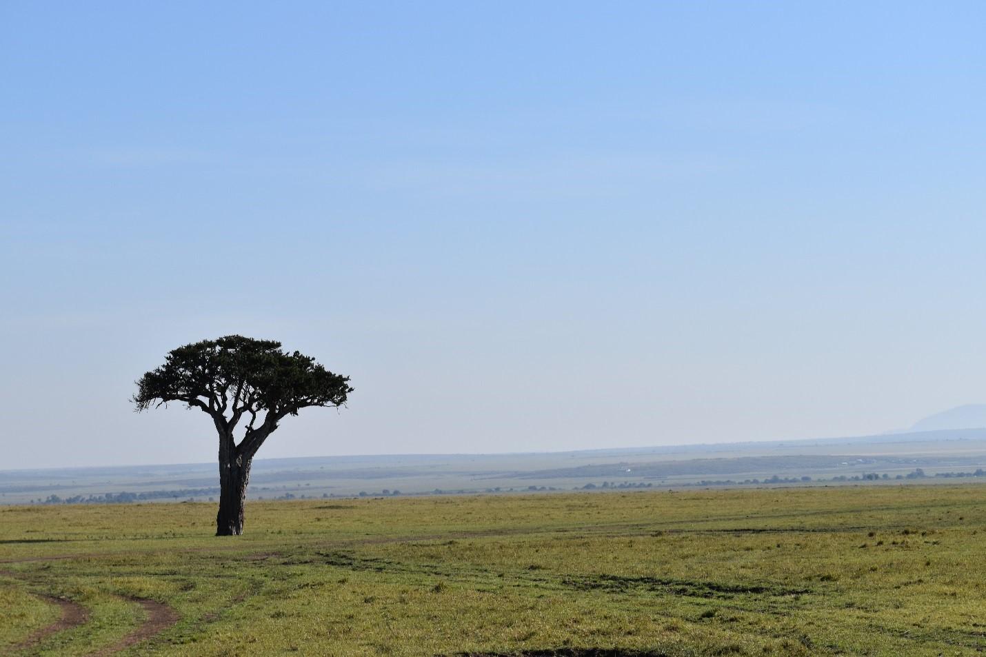 Landscape Mara