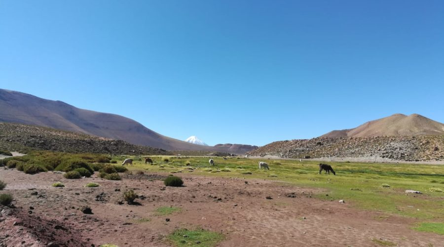 Machuca Wetlands Visited During Tatio Geysers Tour (2)