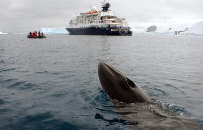 Minke With Ship © Polar Latitudes