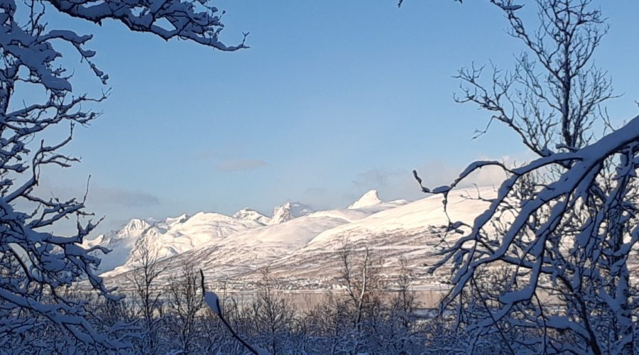 Mountain Landscape Thru Trees Amy Tweet 20190213 131531
