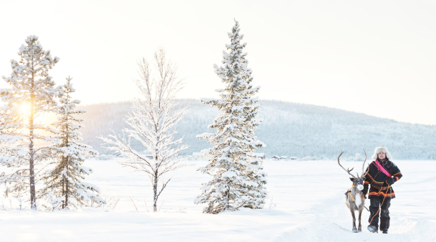 Reindeer Walk Anna Öhlund,imagebank.sweden.se 6485