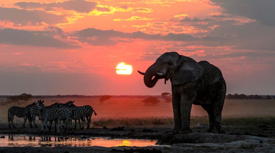 Richard Hebhardt Nxai Pan Sunset Elephant