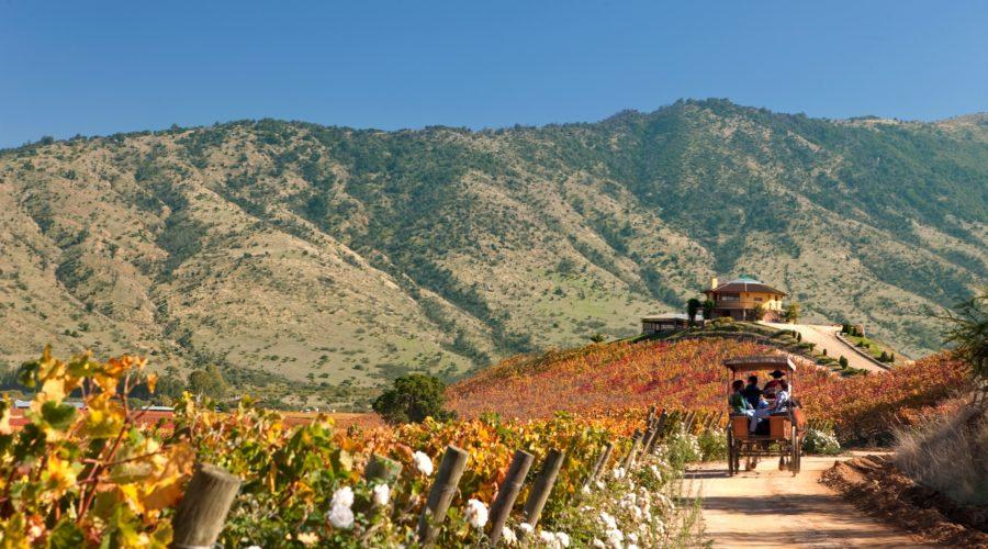 Ruta Del Vino Valle De Colchagua1 Web Ready