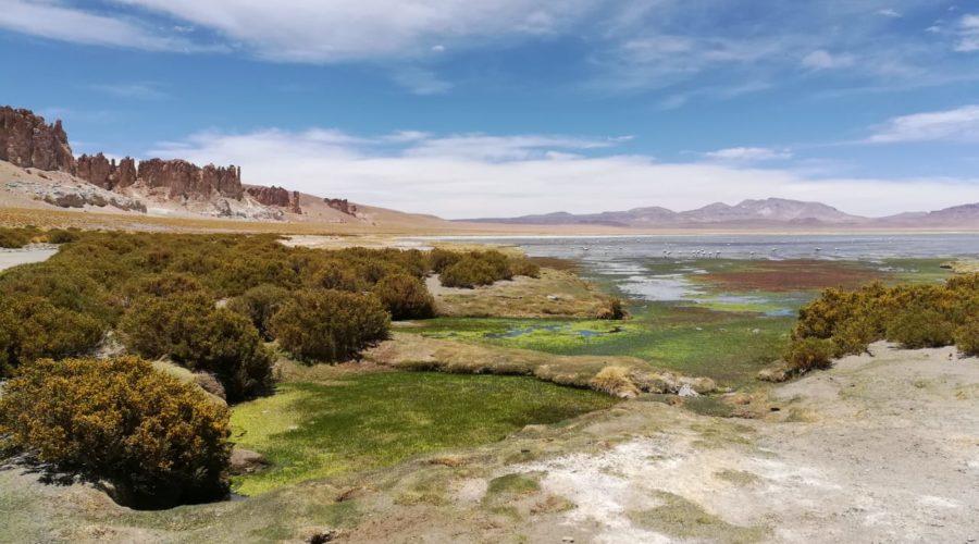 Salar De Tara (tara Salt Flats) (1)