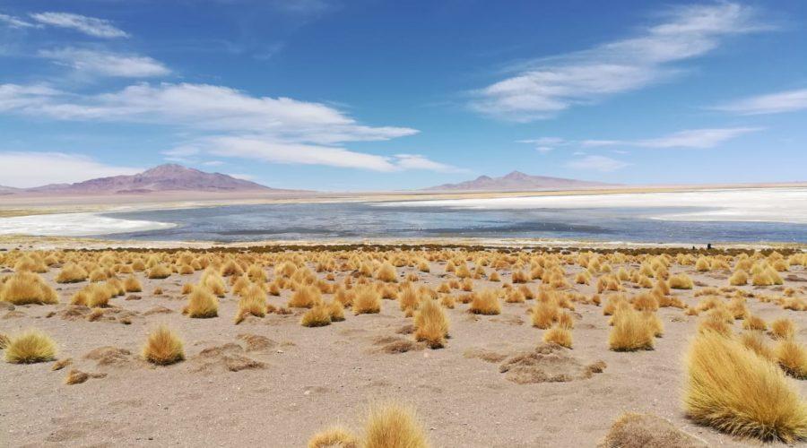 Salar De Tara (tara Salt Flats) (2)