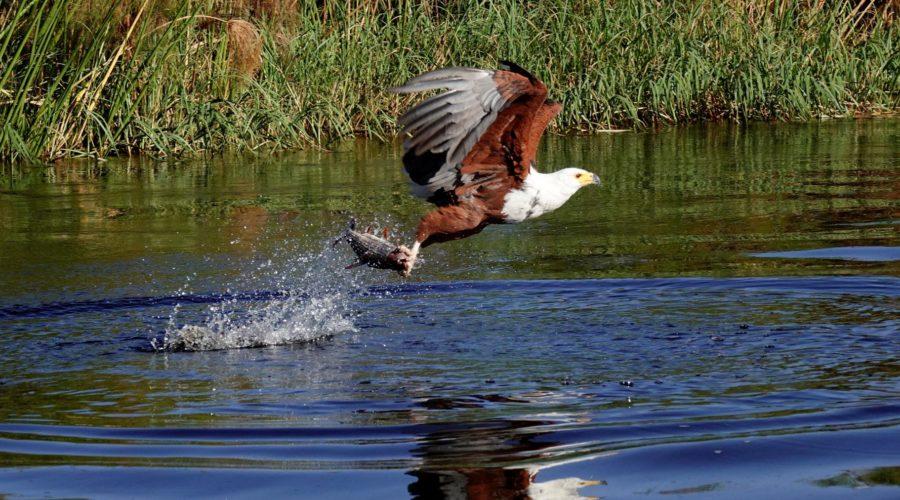Setari Camp Eagle