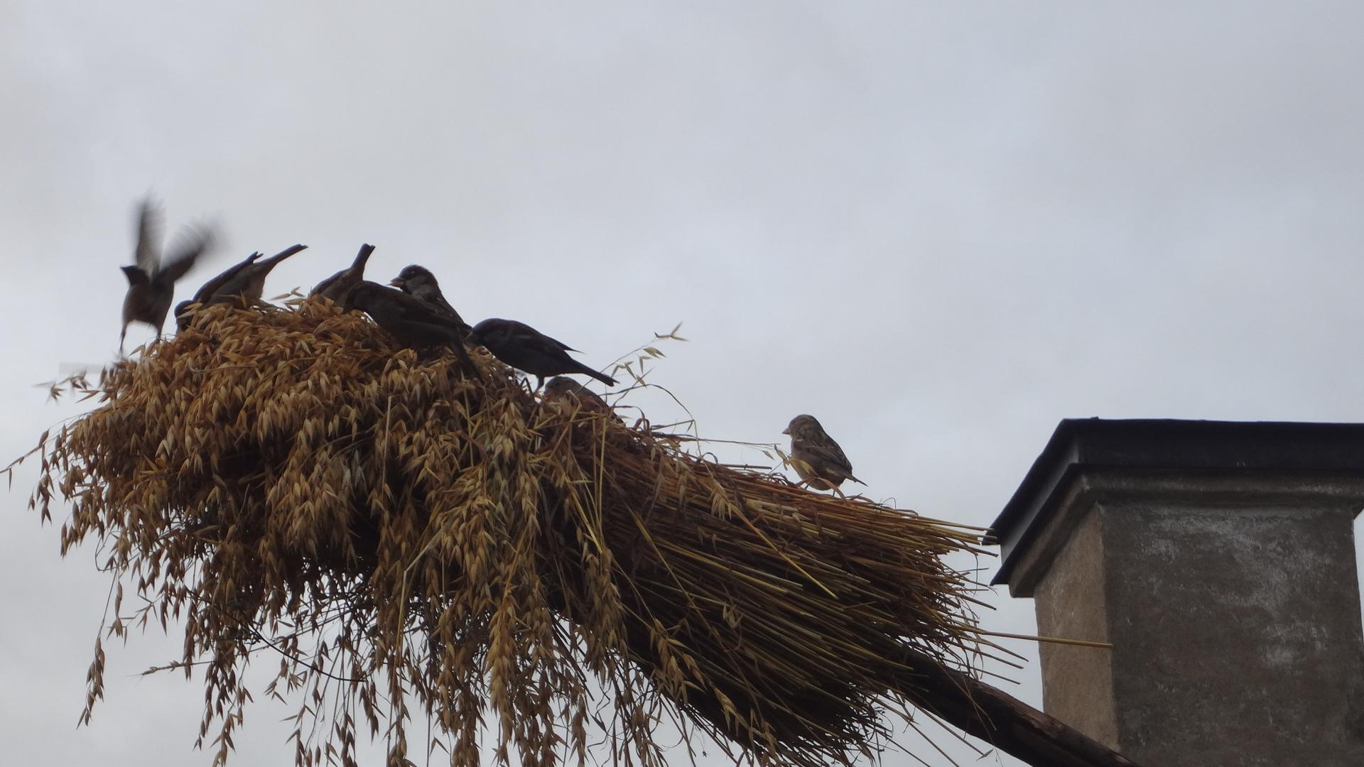 Skansen Birds Dsc02237