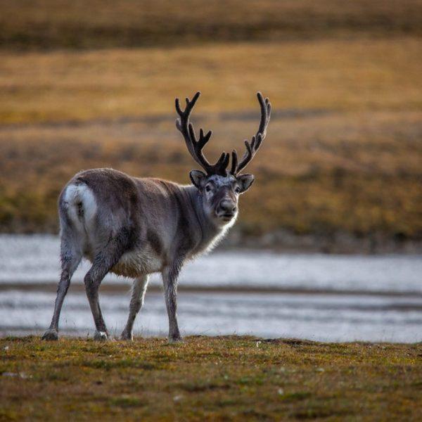 Sommer Pa Svalbard Hgr 135500 1024 +foto Halvor Mykleby