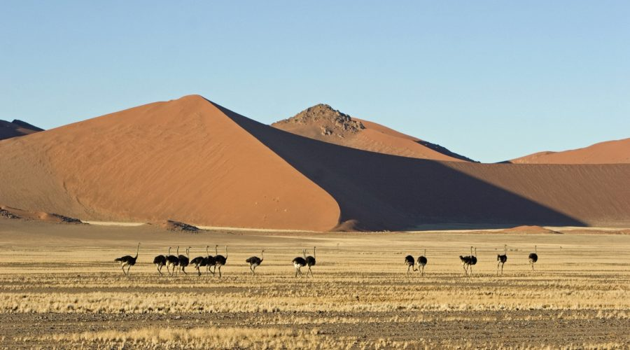Sossusvlei Dunes, Namibia | Photo: Simon Stobbs