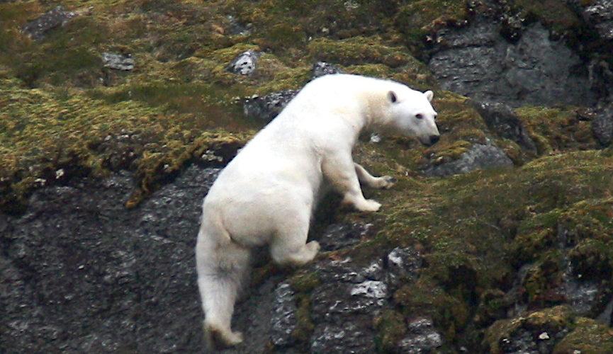 Spitsbergen, 19 27 August, 2010
