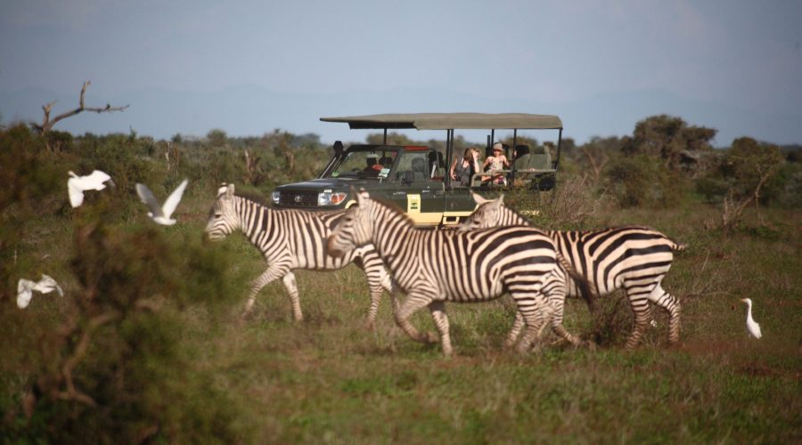 Tortilis Camp, Game Drive
