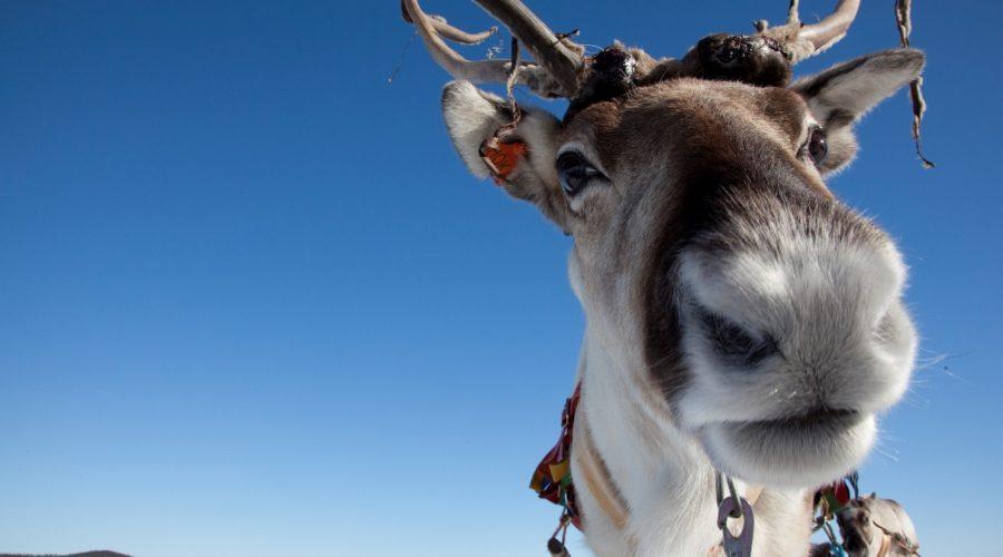 Winter Sami Adventure Visit Inari Web Ready