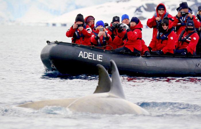 Zodiac Whale Sighting © Polar Latitudes
