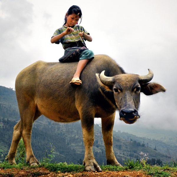 Girl On Buffalo Wr