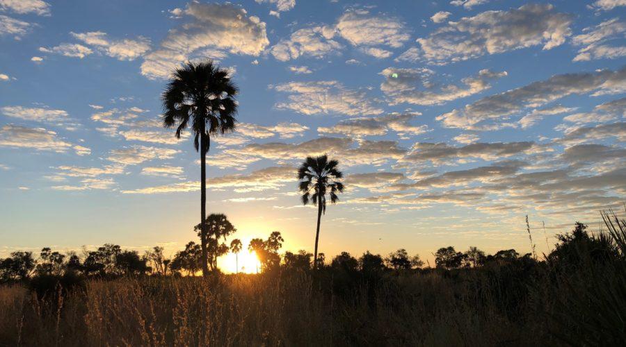 Palm Tree Sunset in the Okavango Delta, Botswana