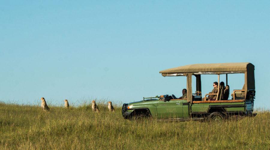 Mara Plains Camp Game Drive