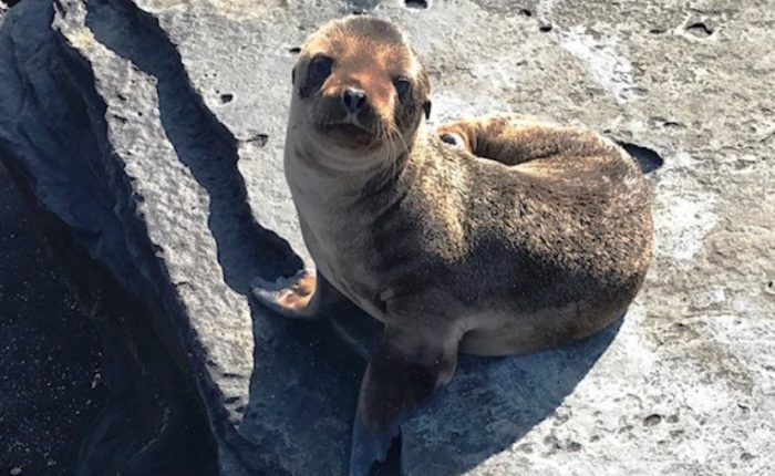Sea Lion Pup Bigger